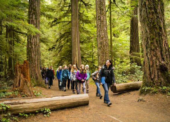 Exploring the forest ecosystem in Olympic National Park
