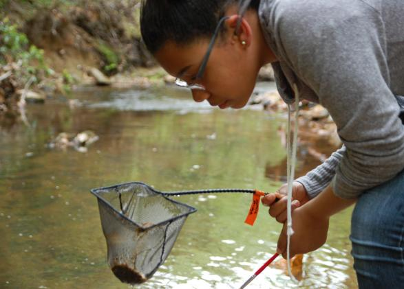 NatureBridge student explores the local creek in Prince William Forest Park