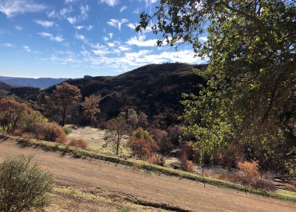 Santa Monica Mountains post-Woolsey Fire