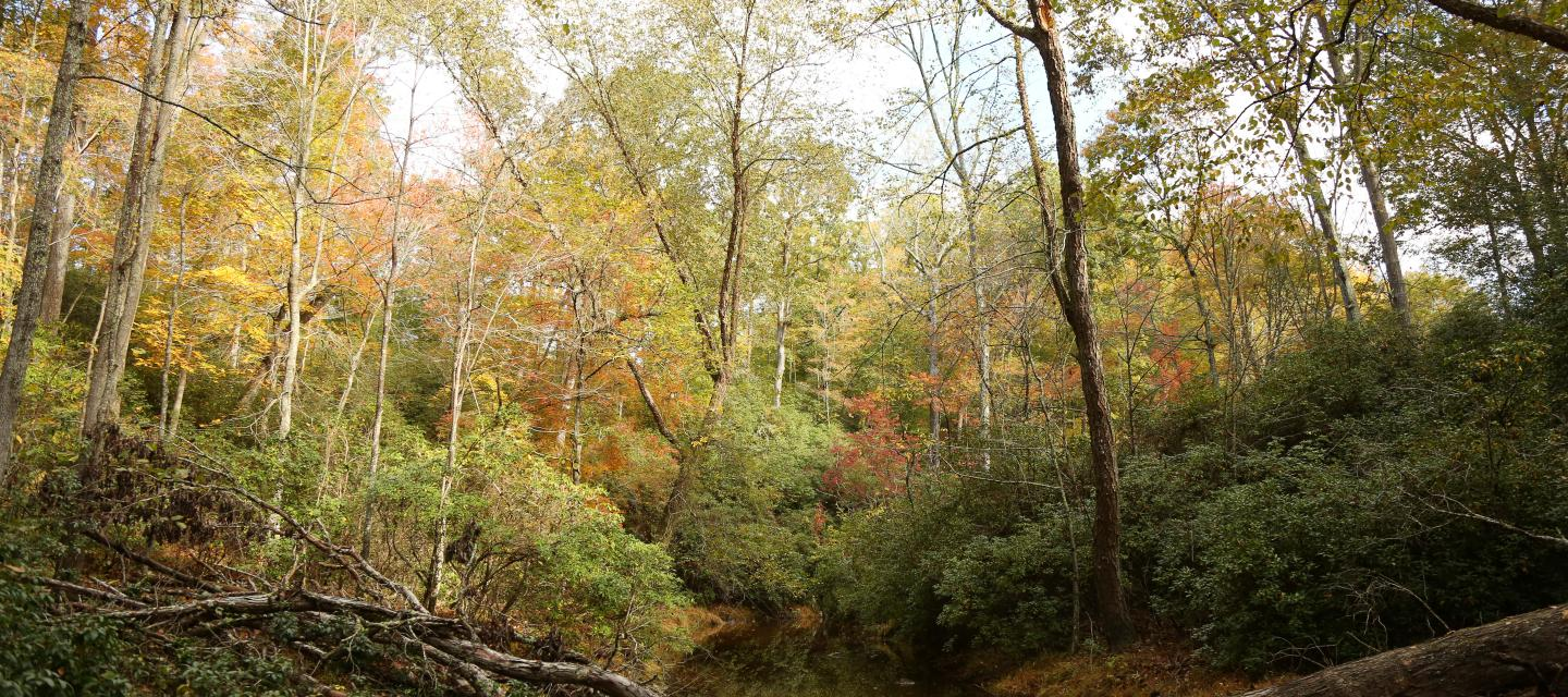 Fall colors in Prince William Forest Park.