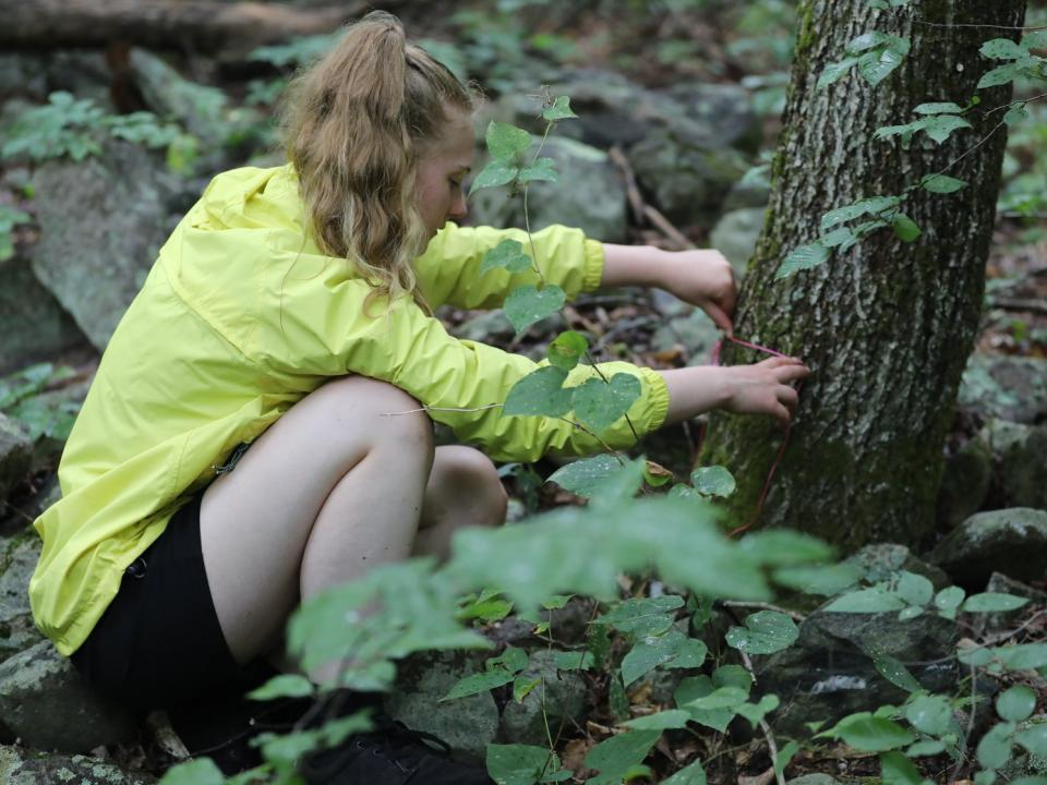 Student collects data in the forest