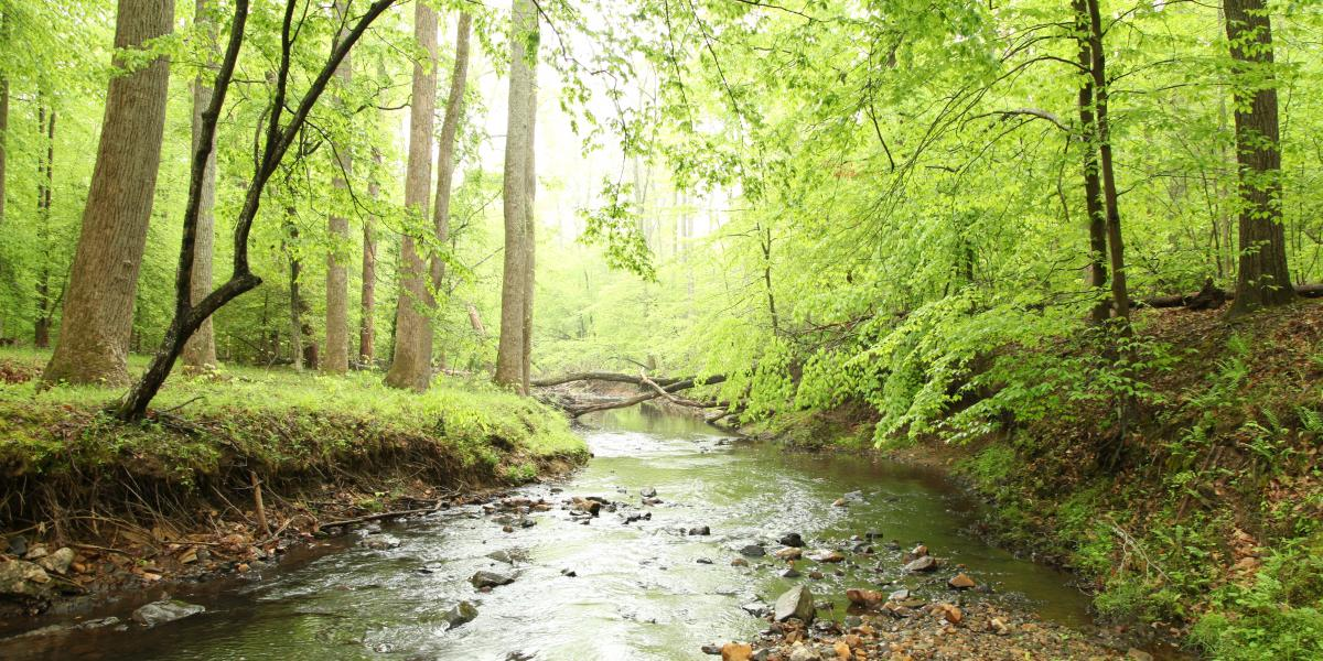 creek in Prince William Forest Park