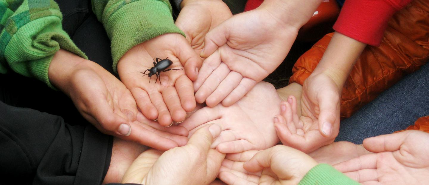 Students hold out their hands to hold a bug.